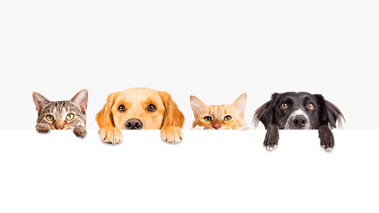 Consejos para tener una mascota sin descuidar tus finanzas